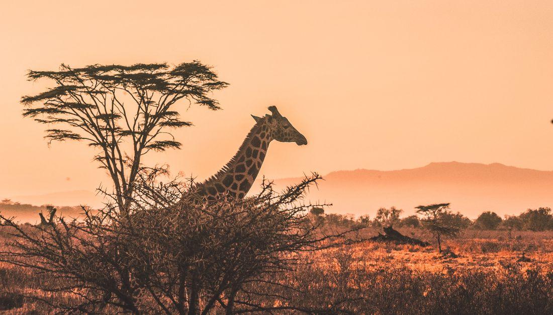 África Precolonial